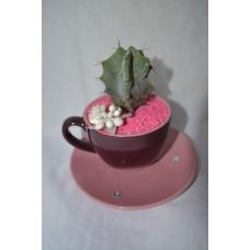 Kaktus v šálke