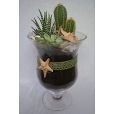 Kompozícia kaktus sukulent mix