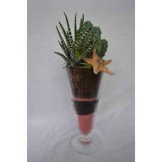 Kompozícia kaktus haworthia