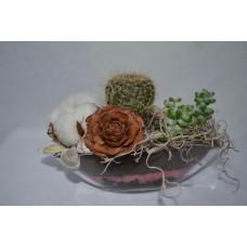 Kompozícia kaktus bavlník cedrova ruža