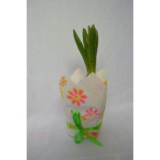 Hyacint v darčekovom balení
