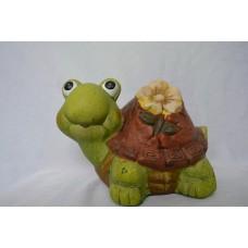 Záhradná korytnačka
