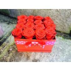 Box ruží dramatic
